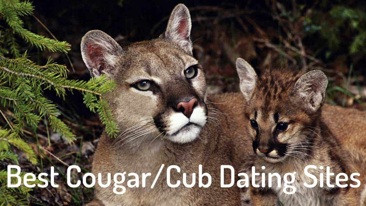 Free cougar dating site Honest Reviews