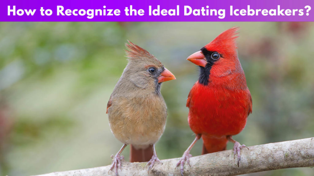 How to recognize the ideal dating icebreakers