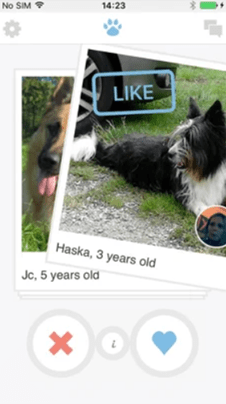 Dating Sites for Dog Owners [year] - Meet Major Dog Lovers 7